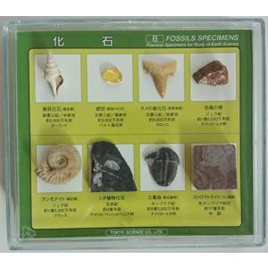 化石標本8種|musubi-syop
