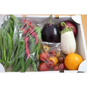 <<<1週間に、限定3箱の販売です!>>>  京の伝統野菜(万願寺とうがらし、伏見甘長とうがらし、賀...