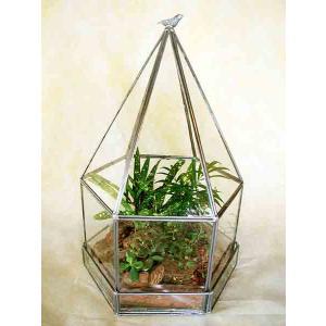【送料無料】テラリウム グリーンハウス 観葉植物 寄せ植え|n-garden