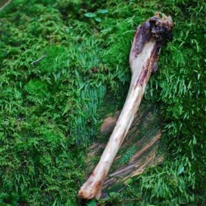 最短賞味2020.2・ワンさまニャンさま シカボーン 太 約30cm 犬用ごほうびおやつ|nachu
