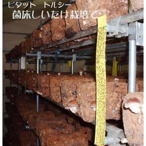 害虫捕獲粘着紙 ビタット トルシーL 黄(100×700mm) 25枚入 − 一色本店|nadja
