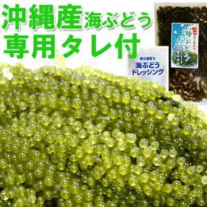 海ぶどう沖縄産100g 天皇杯受賞(クビレヅタ:海水入り海ブドウ)海ぶどうのタレ付  送料無料