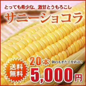 北海道芽室産!希少とうもろこし(サニーショコラ)2L×20本(約8kg)【送料無料!2015年8月中旬頃発送!】 nagahara-shopping