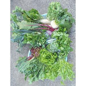 野菜 Mセット 平戸潮風野菜   無農薬・無化学肥料 以下の内から12種類程(お任せでその時々で種類...