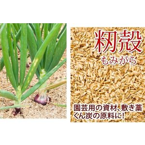 特売 高品質な籾殻もみがら家庭菜園、土壌改良、ハウス栽培に2袋・ 約75リットル入り×2袋 送料無料  もみがら モミ殻