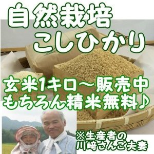 新米 『自然栽培 こしひかり玄米 1キロ』熊本県天草産|nagashimastore7