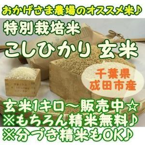 新米 『特別栽培 こしひかり』1キロ玄米 千葉県成田市『おかげさま農場産』 白米 玄米 うるち米|nagashimastore7