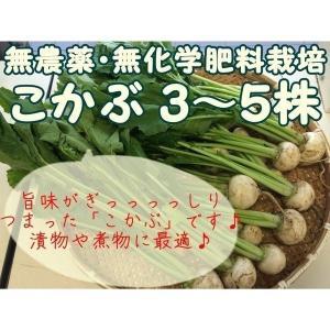 千葉県成田市の無農薬栽培グループ『おかげさま農場』より、会員農家さんが手塩にかけて育てた『無農薬 こ...