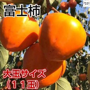 富士柿 愛媛県西宇和産 5Lサイズ 5キロ正箱 ご贈答用に最適です♪