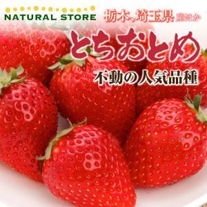 【要冷蔵】とちおとめ  2パック 大粒サイズ  約300g×2パック 栃木県産 苺 いちご イチゴ ...