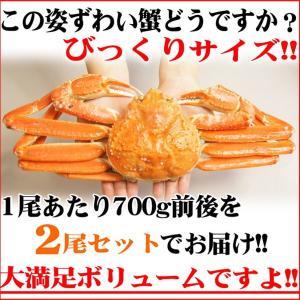 送料無料 お徳用 ボイル姿 ズワイガニ 約700g×2尾セット 脚折れ (ずわい蟹 割引 わけあり グルメ 鍋 ギフト ズワイ) グルメ zuwai2bi nakagawa-k-ichiba 03