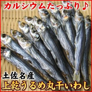 (うるめ ウルメ いわし)土佐名産!上乾 うるめ 丸干 いわし 500g★ カルシウム補給に是非♪(食品 グルメ 贈答ギフト)|nakagawa-k-ichiba