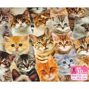 B&B FABRICS デジタルプリント・キャット広巾140cm リアルプリント 猫 ベンガルUSAコットン【生地・布】91225-01|nakanotetsu