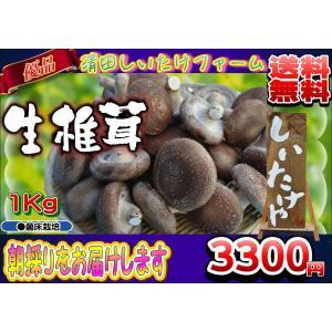 【内容】  生しいたけ(菌床栽培)約1kg   椎茸は生き物のため自然と蒸発などをすると   着荷...