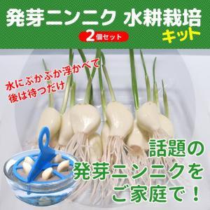 スプラウトにんにく 水耕栽培キット 2個セット 発芽ニンニク 栽培セット|namustore