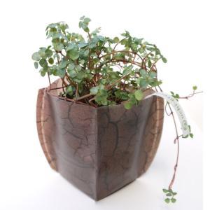 鉢カバー ガーデニング 園芸グッズ uchi-green 大地|namustore