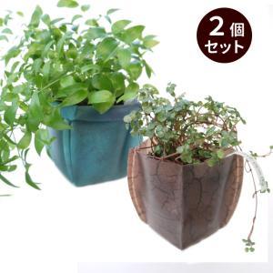 ガーデニング用鉢カバー  園芸用雑貨 uchi-green  2個セット 大地&深海|namustore