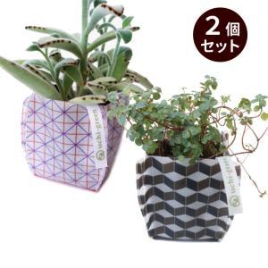 ガーデニング用鉢カバー 園芸用雑貨 uchi-green  2個セット 組み木&格子|namustore