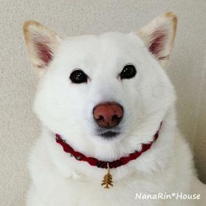 クリスマスチョーカー【キラキラコンビ】大型犬用|nanarin-house