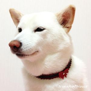 クリスマスチョーカー【リボン】大型犬用|nanarin-house