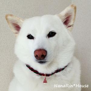 クリスマスチョーカー【シンプル】大型犬用|nanarin-house