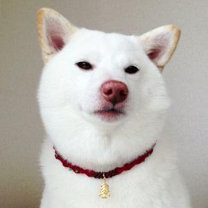 クリスマスチョーカー【キラキラコンビ】小型〜中型犬用|nanarin-house