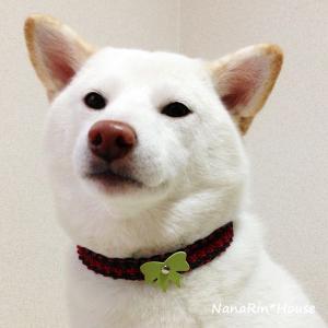 クリスマスチョーカー【リボン】小型〜中型犬用|nanarin-house