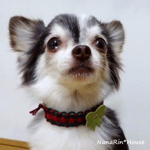 クリスマスチョーカー【リボン】超小型犬用|nanarin-house