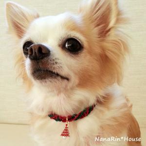 クリスマスチョーカー【シンプル】超小型犬用|nanarin-house