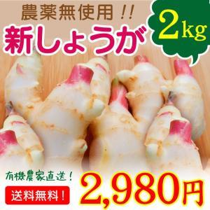 宮崎県綾町産 農薬無使用 新生姜 新しょうが 2kg 送料無料