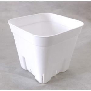 プレステラ 鉢 90型 (9cm) ホワイト 白 10個セット|nano1