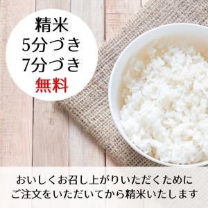 滋賀県産 近江米 秋の詩 令和元年 玄米30kg|nantan-smile|02