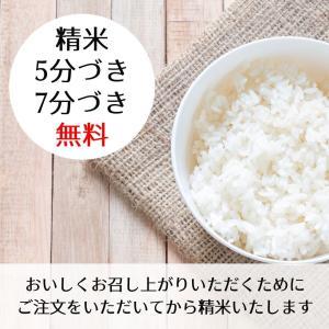 滋賀県産 近江米 キヌヒカリ 令和元年 玄米30Kg|nantan-smile|02