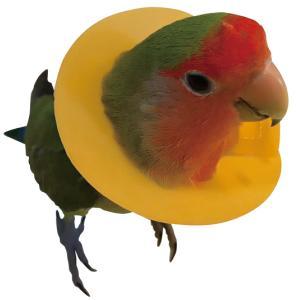 安全な天然ゴム製で、破れにくく、柔らかい「小鳥用エリザベスカラー」。   ●おススメする3つのポイン...