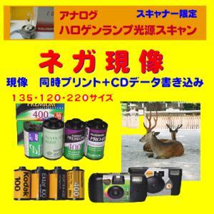 ネガフィルム ネガ現像  同時プリント+CDデータ書き込み  FUJI  Kodak 1本から受付