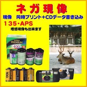 ネガフィルム ネガ現像  同時プリント CDデータ書き込みKodak Ektor PORTRA Kodak PROペーパー仕上げ 1本から受付!