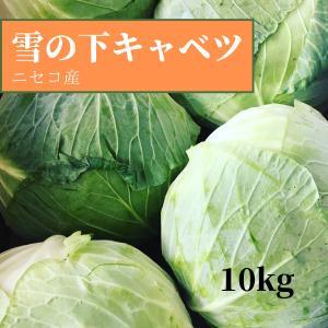 キャベツ 雪の下キャベツ 北海道 ニセコ産 季節限定 10kg