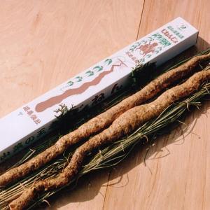 山菜の王者【自然薯(山芋):大サイズ】
