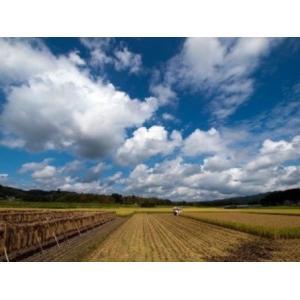 米 新米 縁起米 コシヒカリ 白米 2合(約300g)|nattouya|04