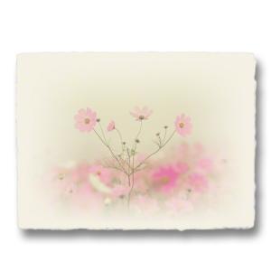 おしゃれな和紙のインテリアアートパネル「霧空のピンクのコスモス」(18x24cm)|natum