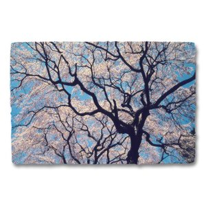 おしゃれな和紙のインテリアアートパネル「青空と一面の桜と黒い幹」(18x27cm)|natum