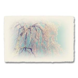 おしゃれな和紙のインテリアアートパネル「青空と風に揺れるしだれ桜」(18x27cm)|natum