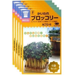 【種】ブロッコリースプラウト 種 35ml 5袋セット(送料無料)