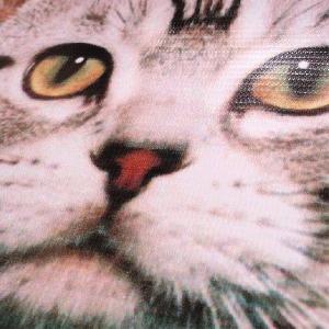 ニャンコ好き必見!インパクト絶大!ネコ好きには絶対おすすめのニャンコ顔ポーチ!|neigh|03