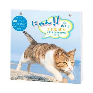2019年 ニャン!!めくり / 五十嵐健太 / リフィル カレンダー 猫 日めくり 卓上|nekobatake