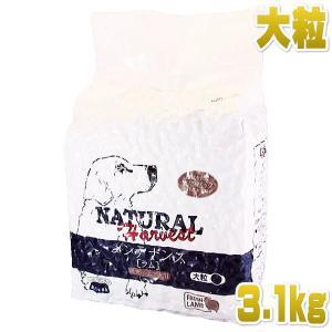 最短賞味2021.5・ナチュラルハーベスト メンテナンス 大袋大粒 3.1kg 成犬シニア犬対応ドライフード Natural Harvest 正規品 nh06472 nekokin