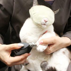 爪切り補助具 もふもふマスク 猫 マスク|nekozuki|18