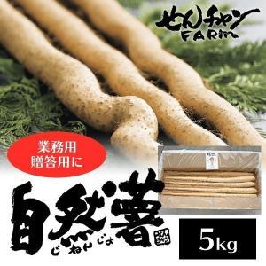 せんチャンファーム 自然薯 5kg 業務用 三原ブランド認定 広島県三原市|nemuriestore