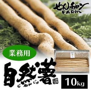 せんチャンファーム 自然薯 10kg 業務用に 三原ブランド認定 広島県|nemuriestore