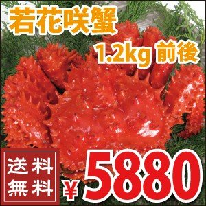 若花咲蟹 1.2kg前後 (かに カニ 蟹 送料無料)|nemurokanisen